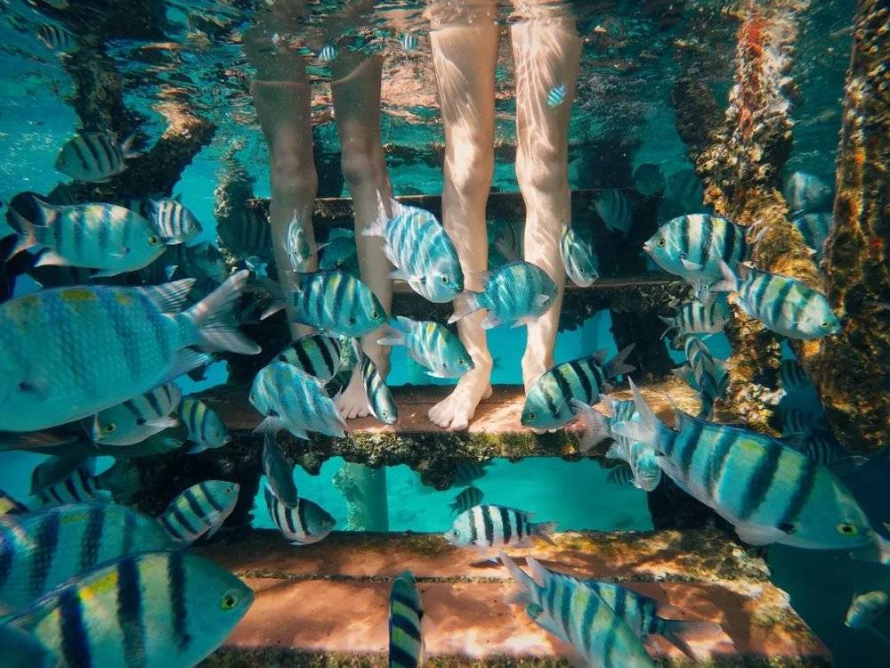 △以色列埃拉特凭借其海洋资源开发了诸多水下体验项目。/unsplash